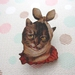 Kitsch kitty brooch, cat with toothache
