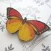Pretty bright butterfly brooch