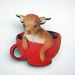 Chihuahua in a teacup brooch