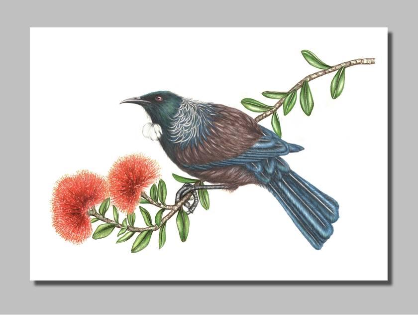 Tui & Pohutukawa. Giclée Print size A4