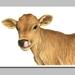 Jersey Calf. Giclée Print size A4