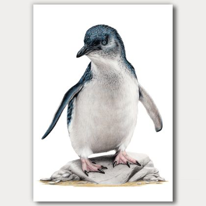Little Blue Penguin / Kororā