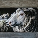'Full Wool Ewe' canvas