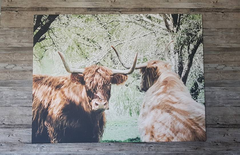 'Horns Crossed' large canvas