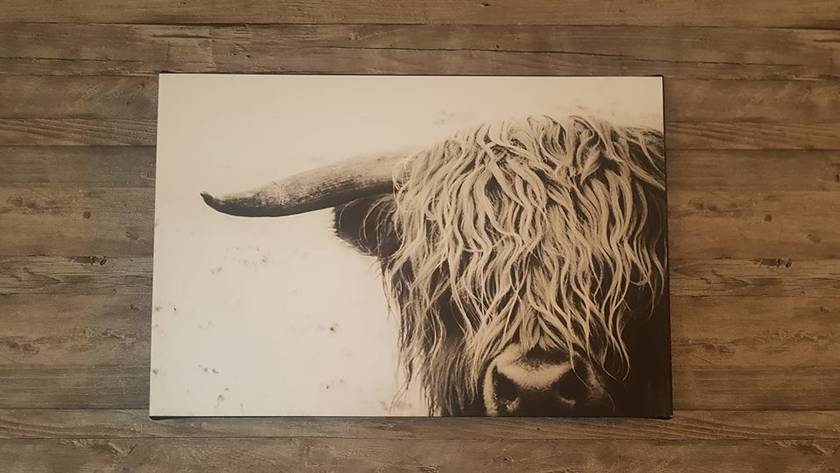 'Curly' original NZ canvas
