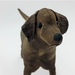 Labrador Dog - SALE