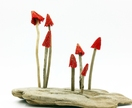 Red Mushrooms - Display - NZ Made