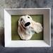 Framed White Dog- NZ Made