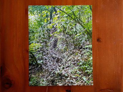 SALE: New Zealand Nature Mandala Photograph Print - Moths' Garden / Mangemangeroa