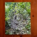 New Zealand Nature Mandala Photograph Print - Moths' Garden / Mangemangeroa