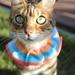 Cat Scrunchie