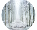 Frost forest woods vinyl wall dot size 60cm x 60cm