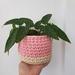 Small planter (pink + cream)