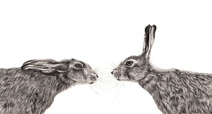 Hare Pair 2020 - limited edition Archival print A3
