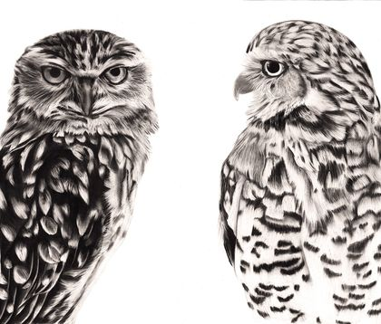 Owl Pair 2020 - limited edition archival print A2