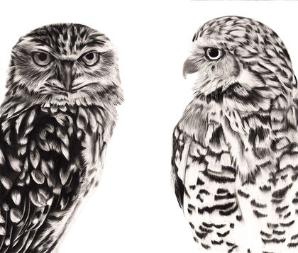 Owl Pair 2020 - limited edition archival print A3
