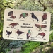 NZ Birds 10 pce Wooden Handcrafted Puzzle