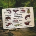 NZ Creatures of Land & Stream 10pce Wooden Handcrafted Puzzle
