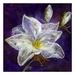 """""""Midnight Magnolia"""" Fibre Art Print 60 x 60cm"""