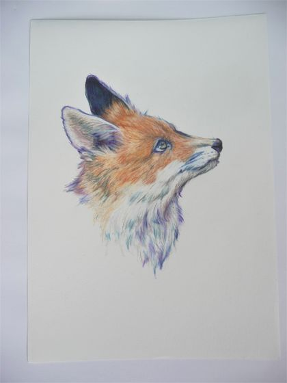 Fox - Coloured pencil artwork