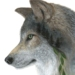 Wolf Art Print - A4