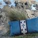 Pasifika Elements in Blue velvet