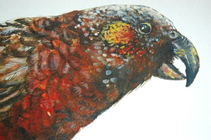 Kākā, New Zealand native bird, illustrated Large print A3, from original watercolor and ink painting artwork