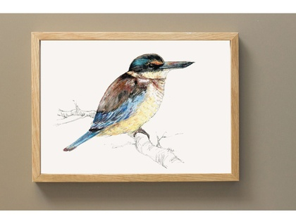 New Zealand illustrated native bird Kōtare (or Kingfisher) - Large print A4 from original watercolor and ink painting