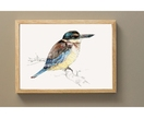 New Zealand illustrated native bird Kōtare (or Kingfisher) - Large print A3 from original watercolor and ink painting