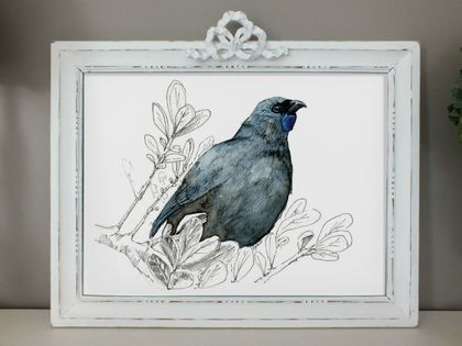 Kōkako New Zealand native bird illustration, A4 and A3 print, from original watercolor and ink painting artwork