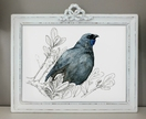 Kōkako New Zealand native bird illustration, A3 print, from original watercolor and ink painting artwork