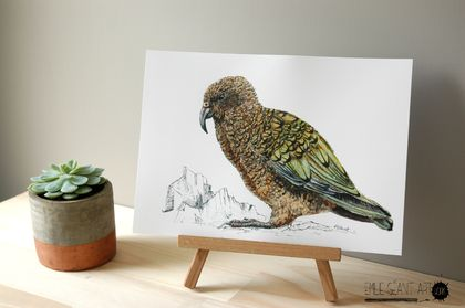 Kea, New Zealand native bird illustration, A3 print from original watercolor and ink painting artwork