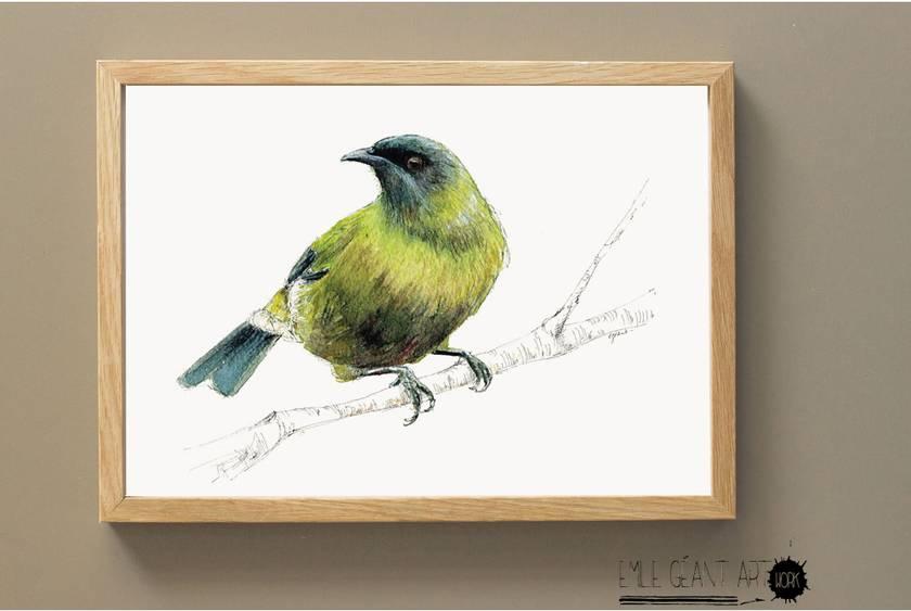 Bellbird, New Zealand native bird, Korimako, illustrated Large print from original watercolor and ink painting artwork