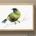 Bellbird, New Zealand native bird, Korimako, illustrated Large print from original watercolor and ink painting artwork