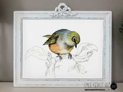 New Zealand native birds prints - Waxeye - A3