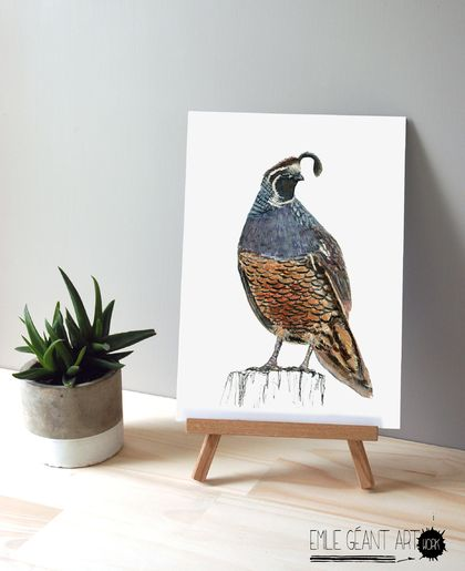 New Zealand native birds prints -  Quail - A4 or A3