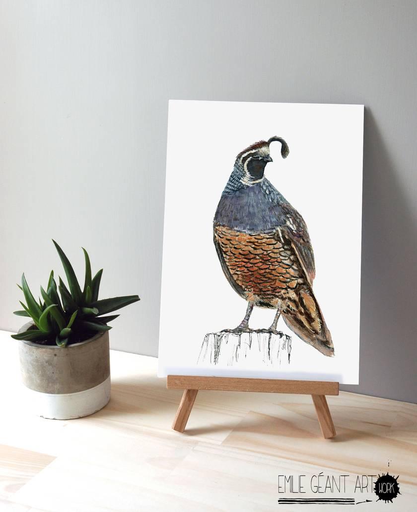 New Zealand native birds prints -  Quail -  A3 print