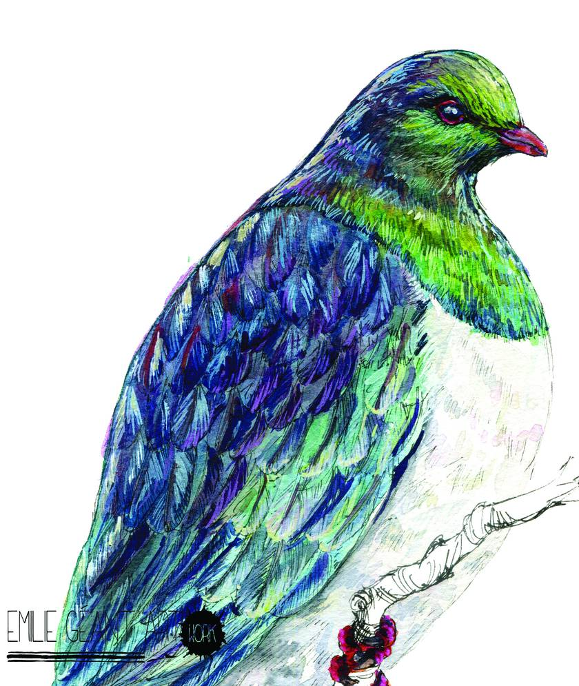 Kereru or Wood Pigeon  New Zealand native bird illustration, print from original watercolor and ink painting artwork
