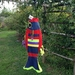 Jacki Sprat Fish Windsock 'Red body/multi trim'