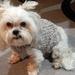 Dog Jersey Pure NZ Wool Small