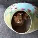 Felt Cat Cocoon - NZ Merino Wool