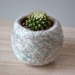 Woolly Cactus Home - Felted Bowl