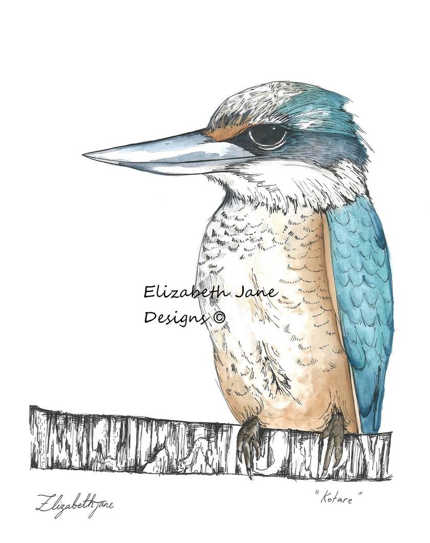 """Kotare"" New Zealand Kingfisher A4"