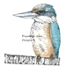 """Kotare"" New Zealand Kingfisher A3"