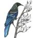 """Tui"" New Zealand Native Bird - A3"