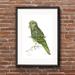 """Kea"" - Fine Art Watercolor Print"