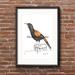 """Saddleback"" - Fine Art Watercolor Print"