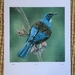 'The Tui' limited edition print