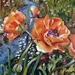Orange Poppies - original oil painting, by Vicky Curtin