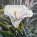 Calla Lily - small original oil painting, by Vicky Curtin